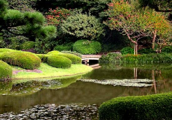The Tokyo's garden